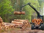 дърва за огрев, дървен материал булмонт форест монтана