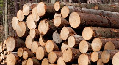 Дърводобив и дървен материал Булмонт Форест