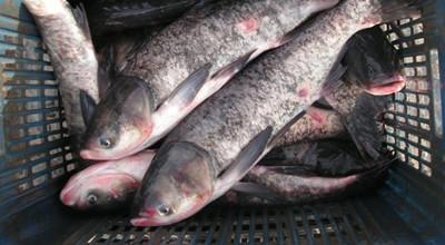 Рибарник ЕТ Ценков 64 Червен Бряг