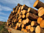 дърводобив дс лес - търговия с дървен материал