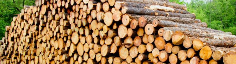ДС ЛЕС - дърводобив, търговия с дървен материа