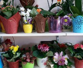 Магазин за цветя - ФИОРЕ Бургас