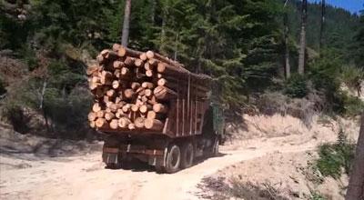 Дърводобив, дърва за огрев, пелети Стара Загора